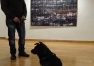 Perros amantes del Arte 26