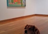 Perros amantes del Arte 19