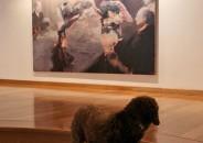 Perros amantes del Arte 2