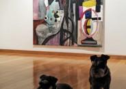 Perros amantes del Arte 22