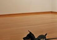 Perros amantes del Arte 5