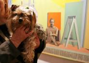 Perros amantes del Arte 18