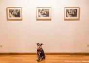 Perros amantes del Arte 27