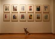 Perros amantes del Arte 11