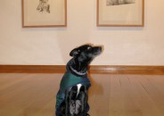 Perros amantes del Arte 9