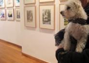 Perros amantes del Arte 12