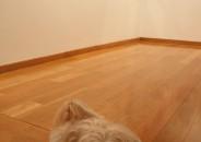 Perros amantes del Arte 14